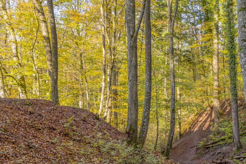 Colorful autumn forest royalty free stock photography