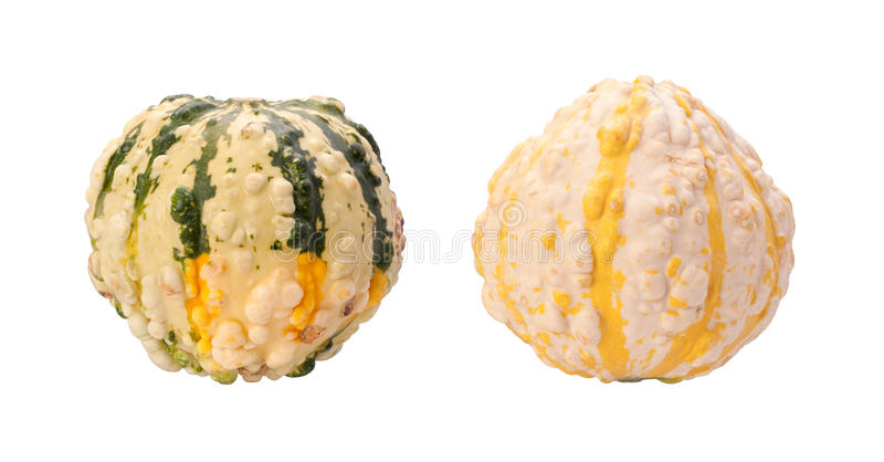 Download Colorful Autumn Gourds Isolated With Clipping Path Stock Image - Image: 21844885
