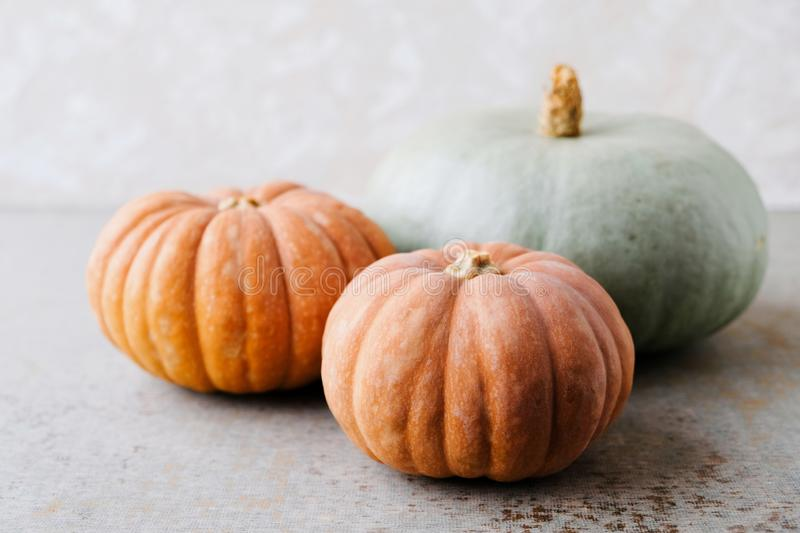 Colorful autumn Halloween pumpkins. Thanksgiving food preparations. Space for text. Colorful autumn Halloween pumpkins. Thanksgiving preparations. Copy space for royalty free stock photos