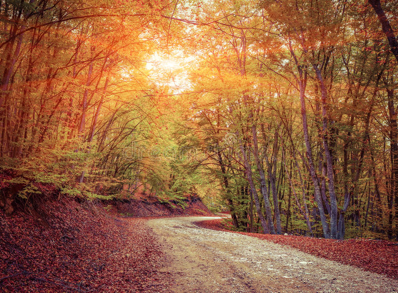 Colorful autumn landscape in forest with old road royalty free stock photo
