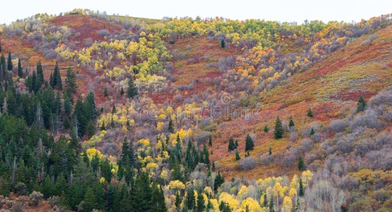 Colorful autumn landscape near Park City, Utah stock images
