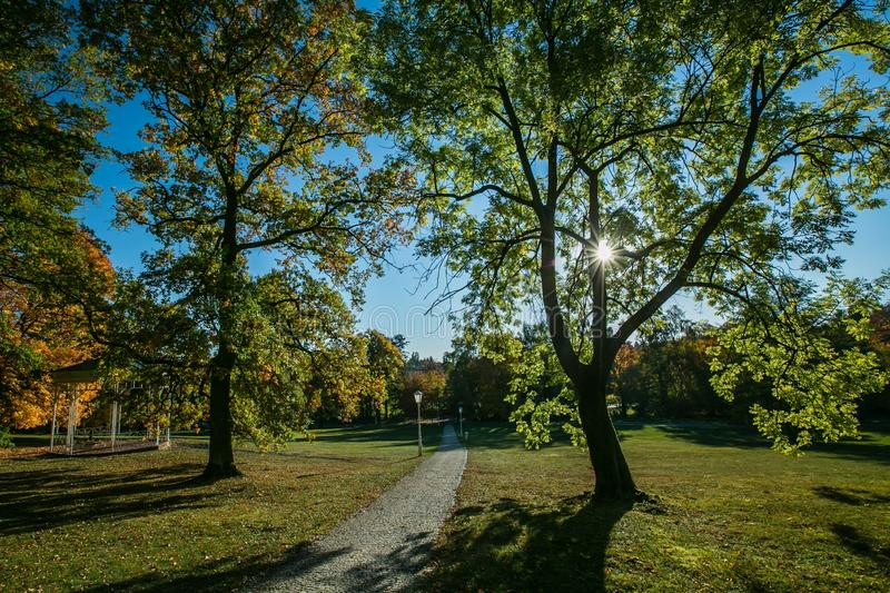 Colorful autumn landscape with trees in a park with a path stock photography