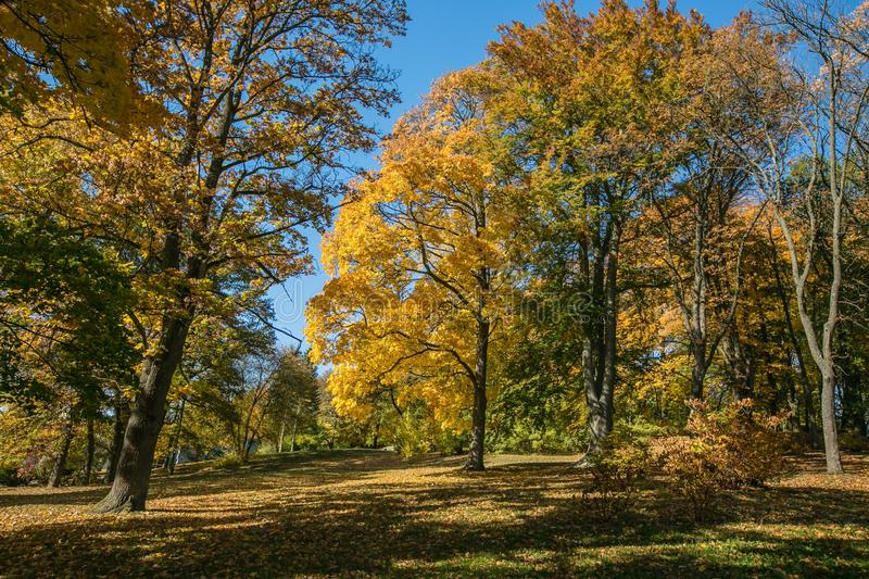Autumn landscape on a bright sunny day stock images