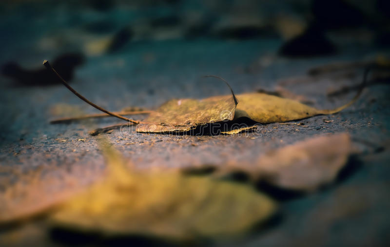 Colorful autumn leaf royalty free stock photography
