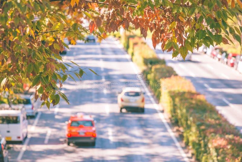 Colorful autumn leaf over street near yoyogi park royalty free stock images