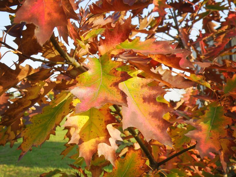 Colorful Autumn Leafs stock images