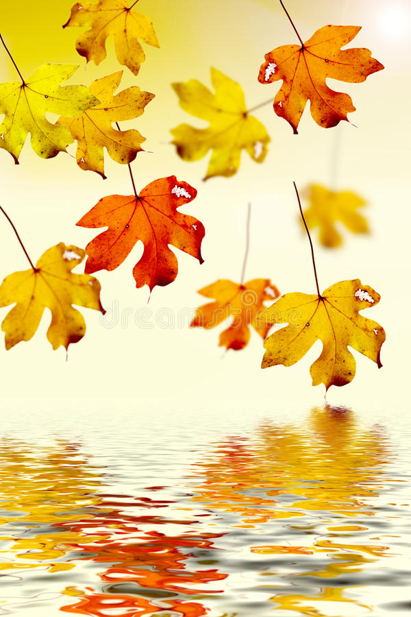 Download Colorful autumn leaves stock illustration. Image of autumnal - 10950459