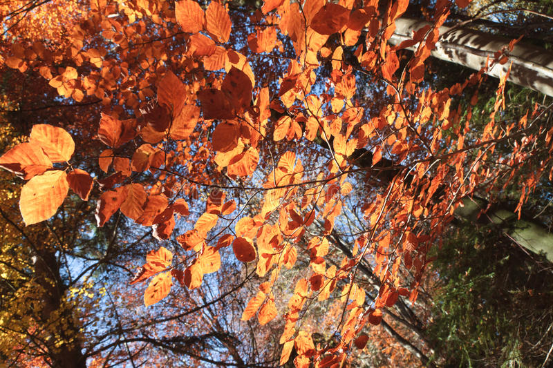 Download Colorful autumn leaves stock image. Image of branches - 21949315