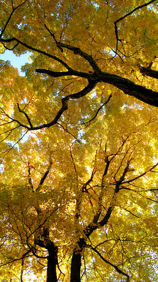 Download Colorful autumn leaves stock image. Image of wooded, outdoors - 6791753