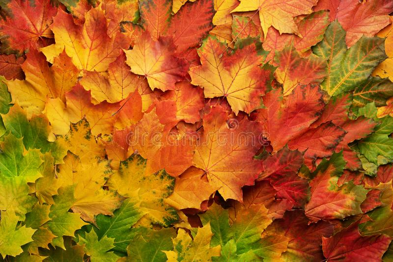 Colorful autumn leaves background with copy space. Cozy fall mood. Season and weather concept stock photos