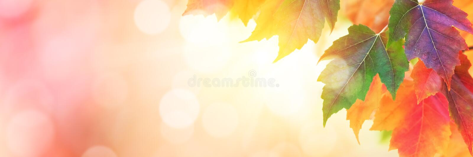 Colorful autumn leaves background. Autumn background with multi colored leaves stock images