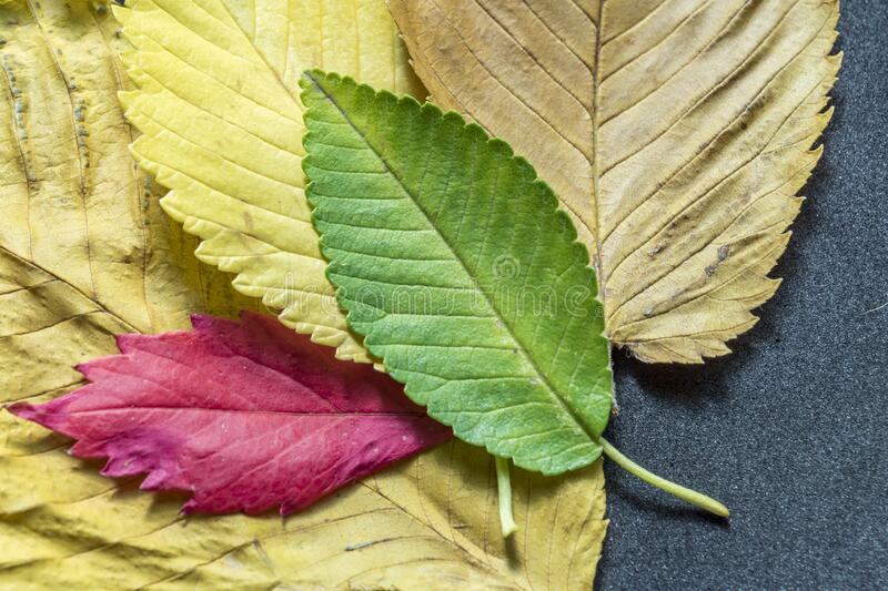 Colorful autumn leaves background texture.  stock photo