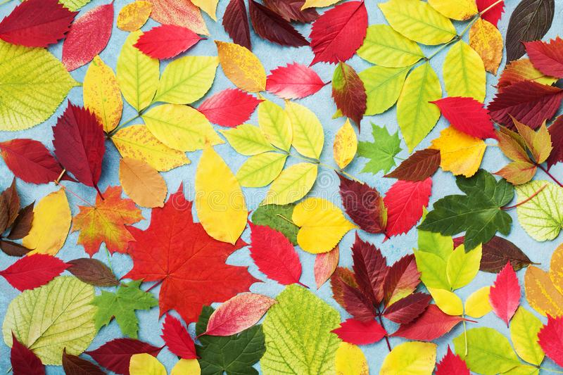 Colorful autumn leaves background top view. Bright fall patterns. stock photos