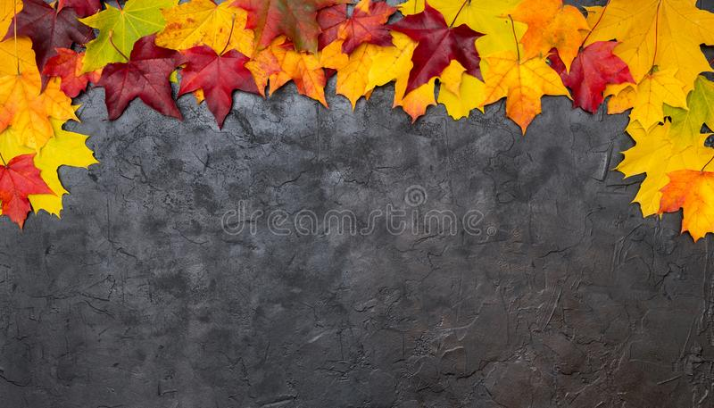 Colorful autumn leaves on a black textural background stock photo