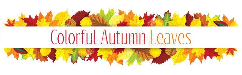 Colorful autumn leaves border vector illustration