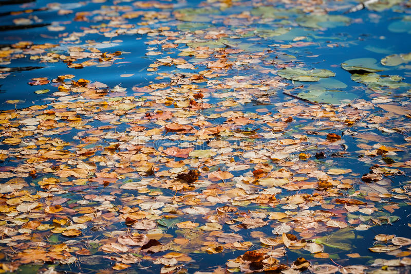 Colorful autumn leaves on cold blue water with sun reflections, gold ripples. Concept of autumn has come. Modern background, wallpaper or banner design royalty free stock photo