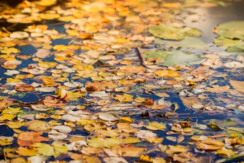 Colorful autumn leaves on cold blue water with sun reflections, golden mosaic, blurred background royalty free stock photo