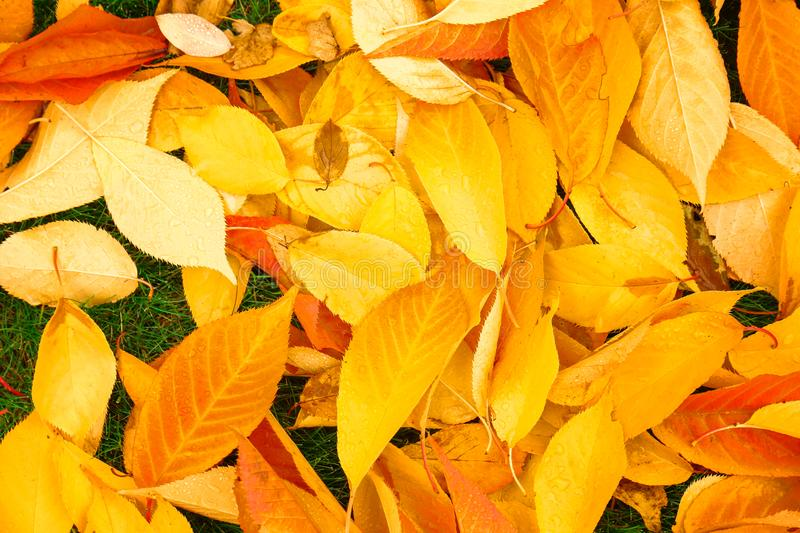 Colorful autumn leaves stock images