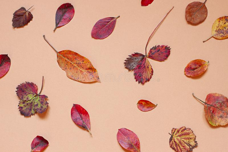 Colorful Autumn leaves concept pattern on the beige background. stock photography