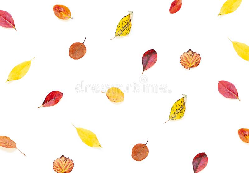 Colorful Autumn leaves concept pattern on the white background. royalty free stock photos