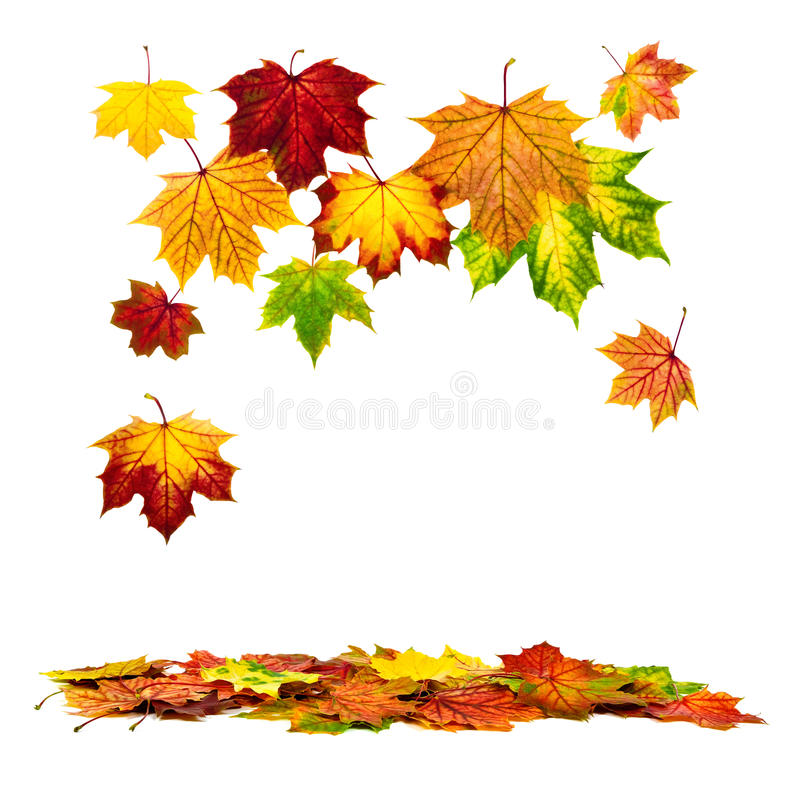 Colorful autumn leaves falling down. Multi-colored autumn leaves falling down, with white copy space royalty free stock image