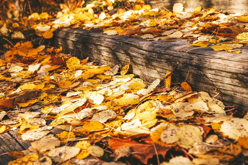 Colorful autumn leaves in Finland royalty free stock image