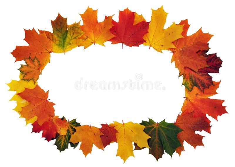 Autumn colorful leaves frame stock image