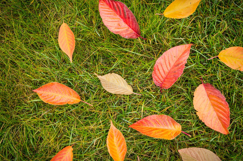 Colorful autumn leaves on green grass (lawn) - top view. Colorful autumn leaves on green grass (lawn) background captured from above (top view). Fall in the stock photo