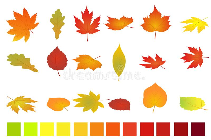 Colorful autumn leaves isolated on white background. Flat and isometric vector illustration. Autumn leaves set simple royalty free illustration