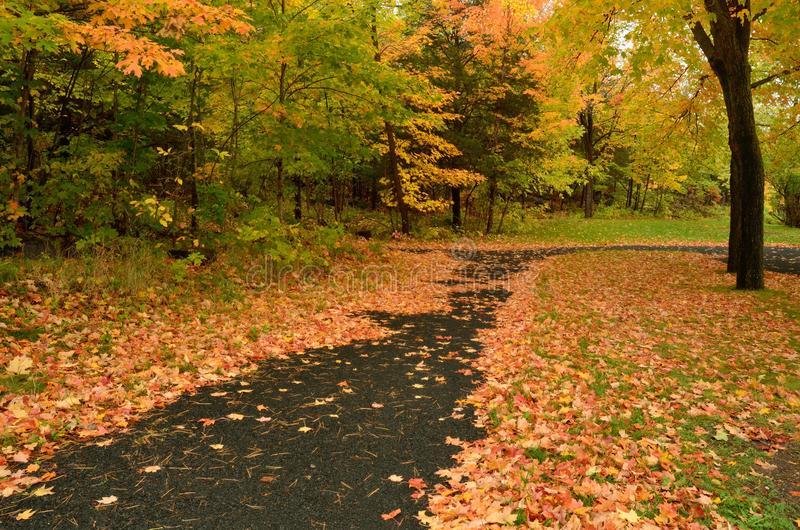 Colorful Autumn Leaves on a Path. Colorful Fallen Maple Leaves on Paved Path in Autumn stock photo