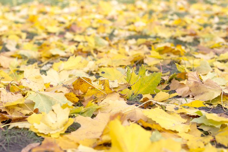 Colorful autumn leaves. Autumn pattern. Yellow and green leaves royalty free stock photography