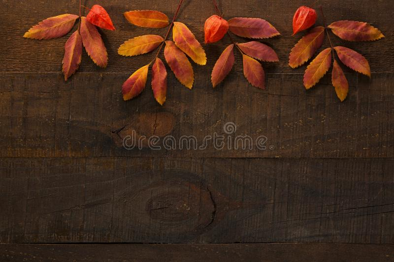 Colorful autumn leaves of Rowan and  fruit of  Physalis on the dark wooden table. Autumn composition royalty free stock photos