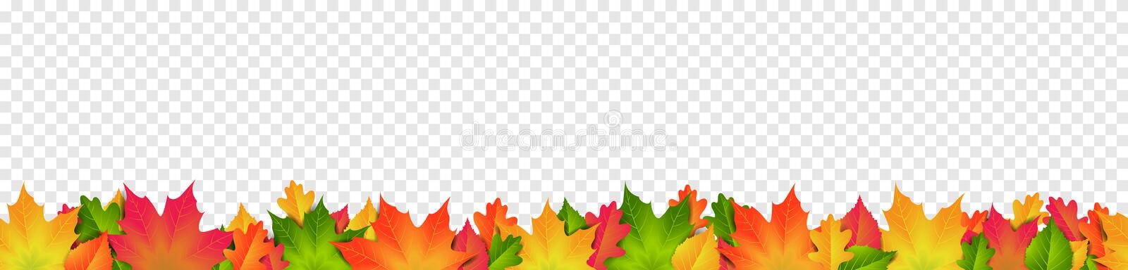 Colorful autumn leaves seamless pattern banner isolated transparent background vector. Design royalty free illustration