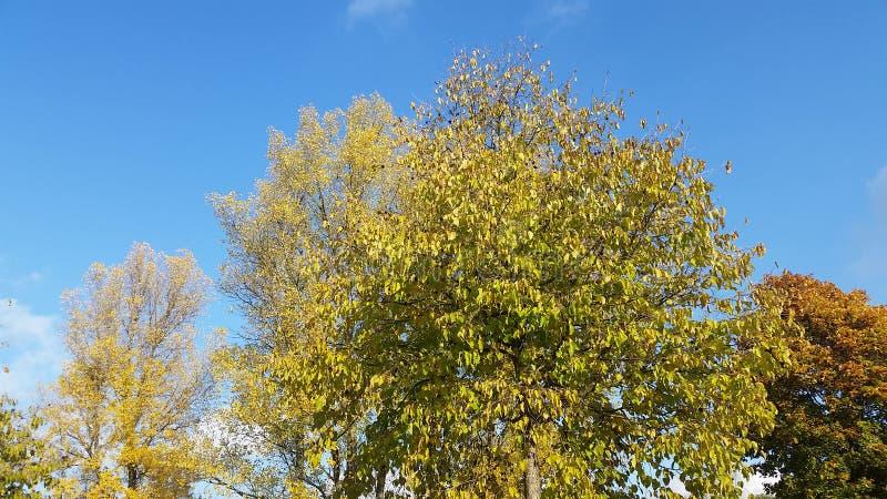 Autumn Leaves Season Change royalty free stock photo