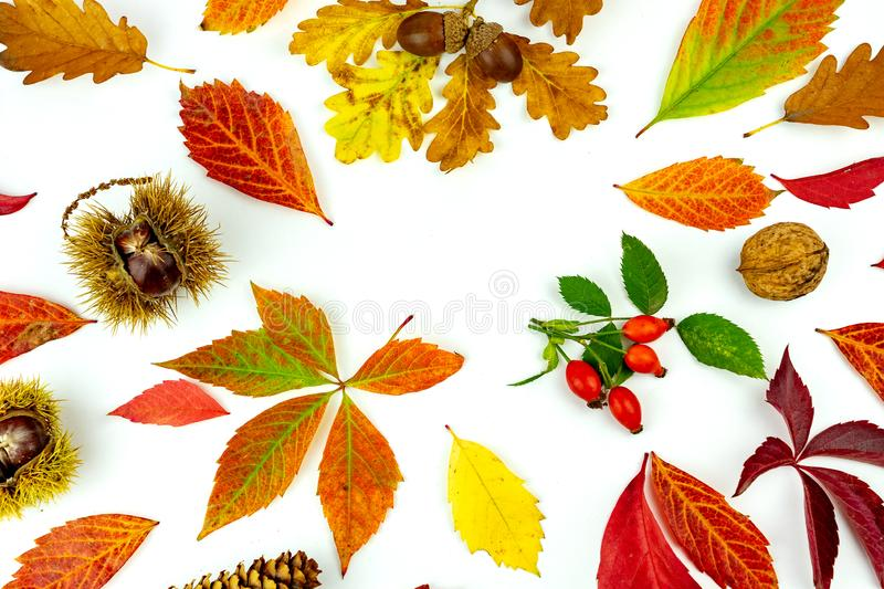 Colorful autumn leaves and yields pattern isolated on white background. flat lay, overhead view royalty free stock image