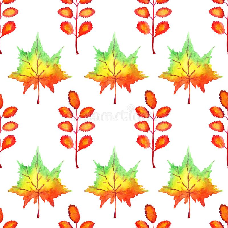 Colorful autumn maple and acacia leaves, hand painted watercolor illustration, seamless pattern on white. Background stock illustration