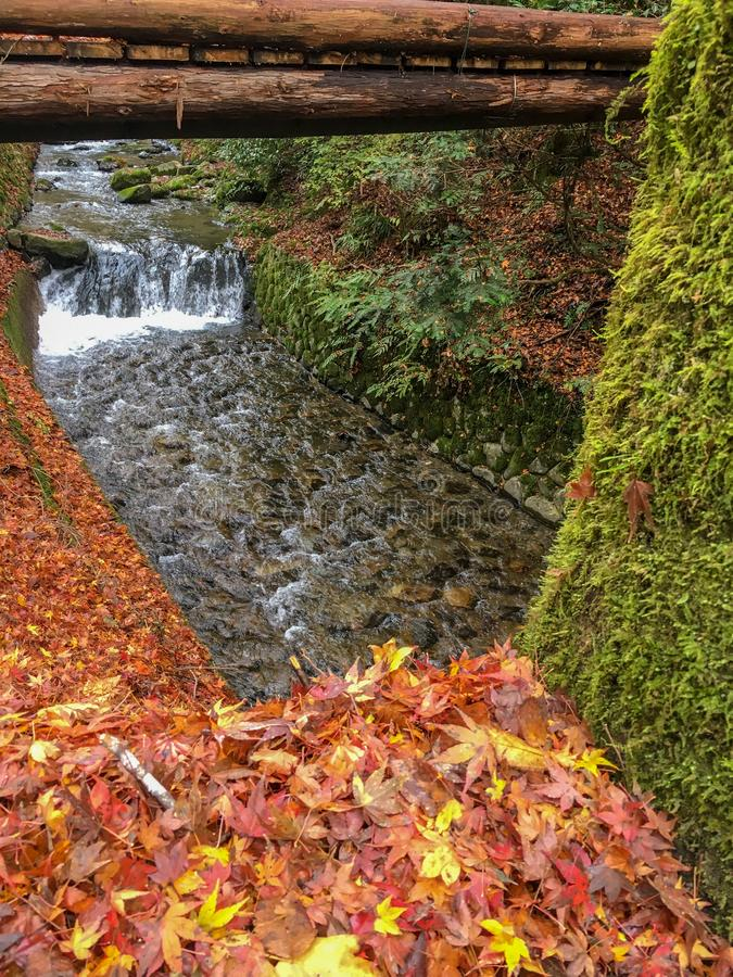 Colorful autumn maple leaves drop on ground beside the fresh small stream for background with copy space stock photo