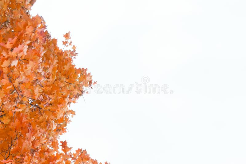 Colorful autumn maple leaves frame. Isolated on white background royalty free stock photos