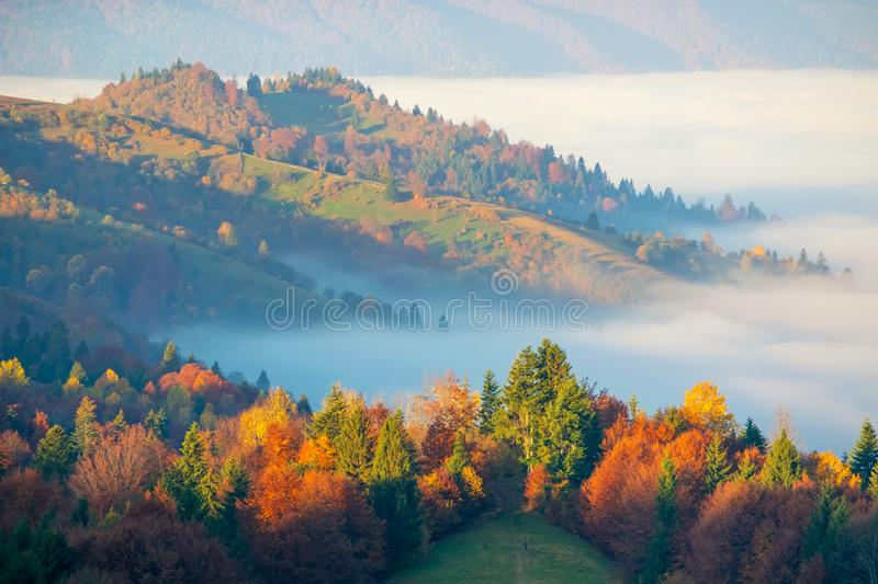 Colorful autumn morning in the Carpathian mountains royalty free stock images