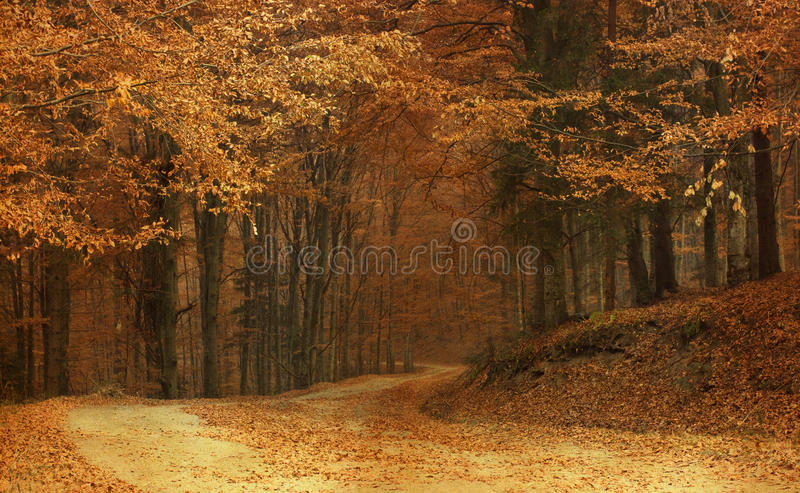 Colorful autumn in the mountains stock photo