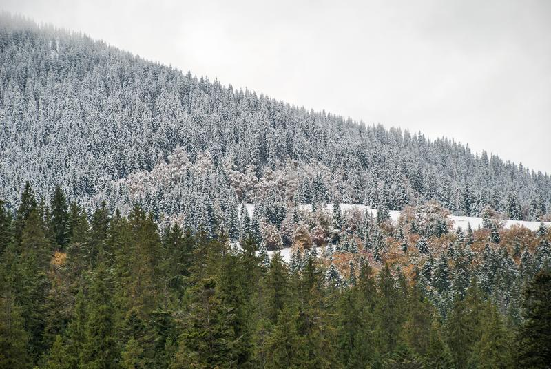 Colorful autumn in the mountains. First snow in october stock photos