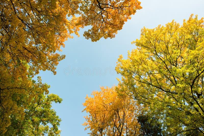 Colorful autumn stock image