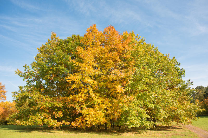 Download Colorful autumn stock image. Image of sunlight, color - 34409671