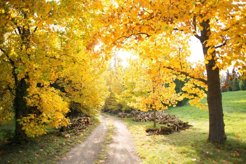 Colorful autumn royalty free stock photos
