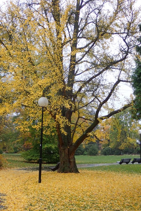 Colorful autumn nature in a park stock photo