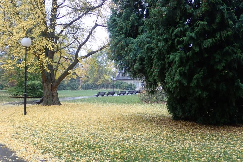 Colorful autumn nature in a park stock photos