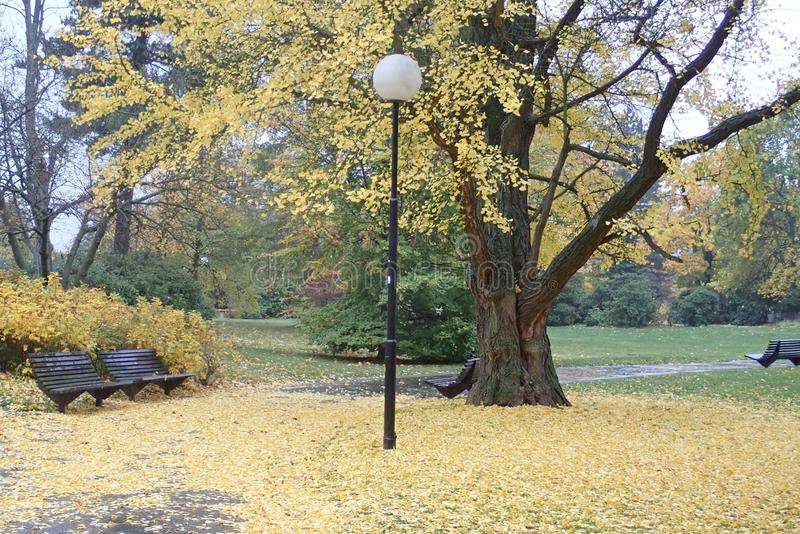 Colorful autumn nature in a park royalty free stock photography