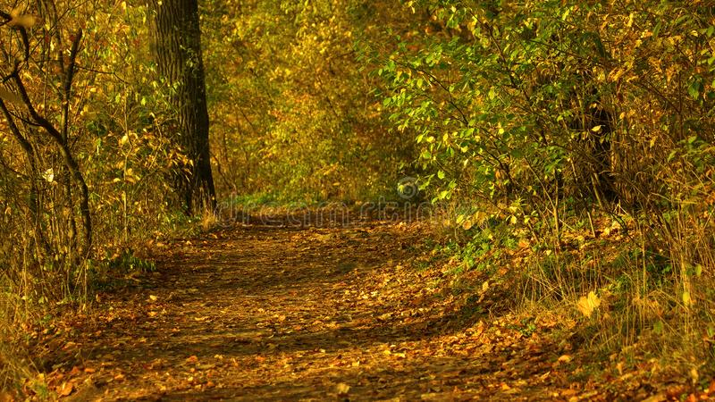 Colorful autumn nature in sunny forest. stock photography