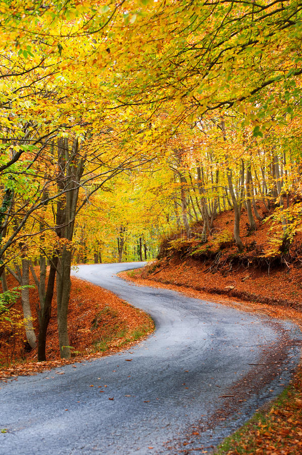 Download Colorful autumn path stock image. Image of seasonal, ghost - 27917931