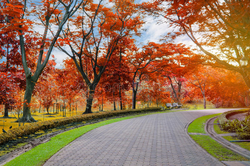 Colorful of the autumn in pedestrian walkway for exercise at pub royalty free stock photography
